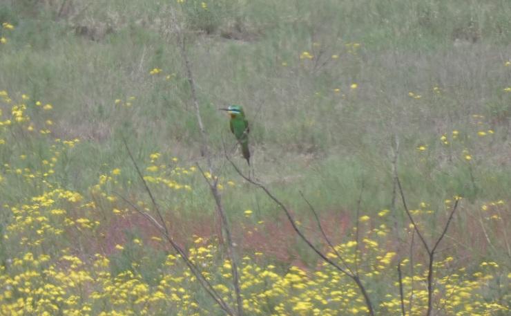 grøn biæder